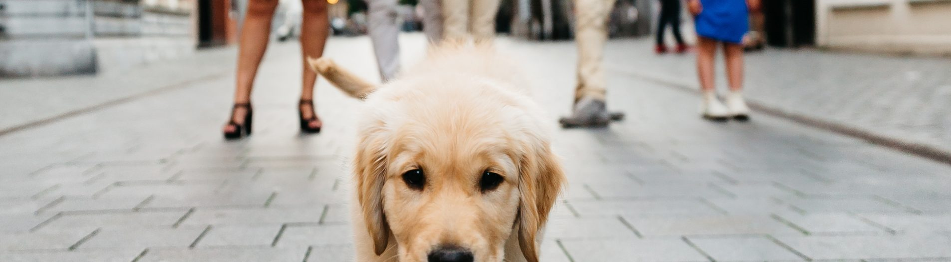 Gezinsfotografie met hond